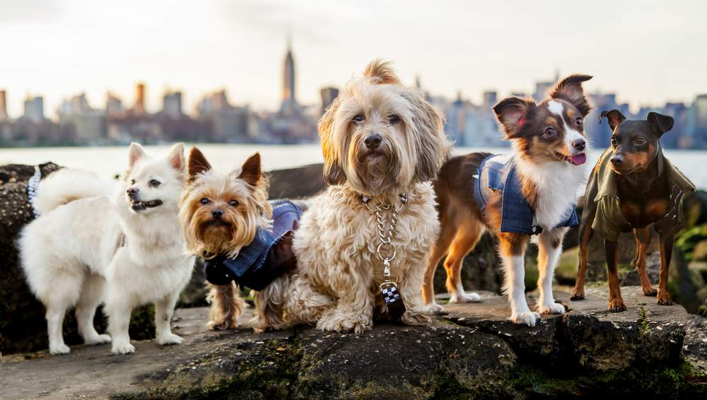 Introducing Punk Rock Fashion For Small Dogs