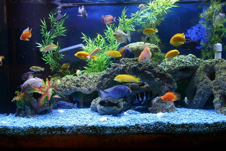 What You Need To Know About Fish Aquariums