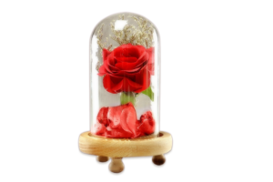 Very Beautiful Cloche Display Rose Flower In Glass Dome