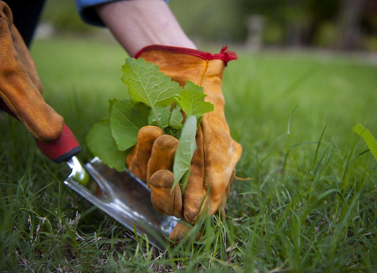 How to Choose the Best Weed Removers & Tools?